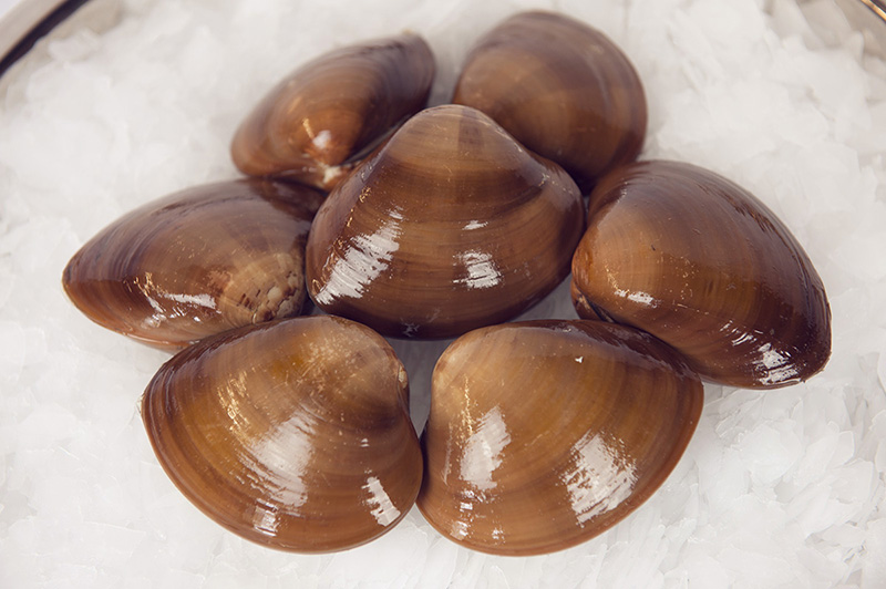Almejas Chocolatas Tatemadas (Chocolate Clams)