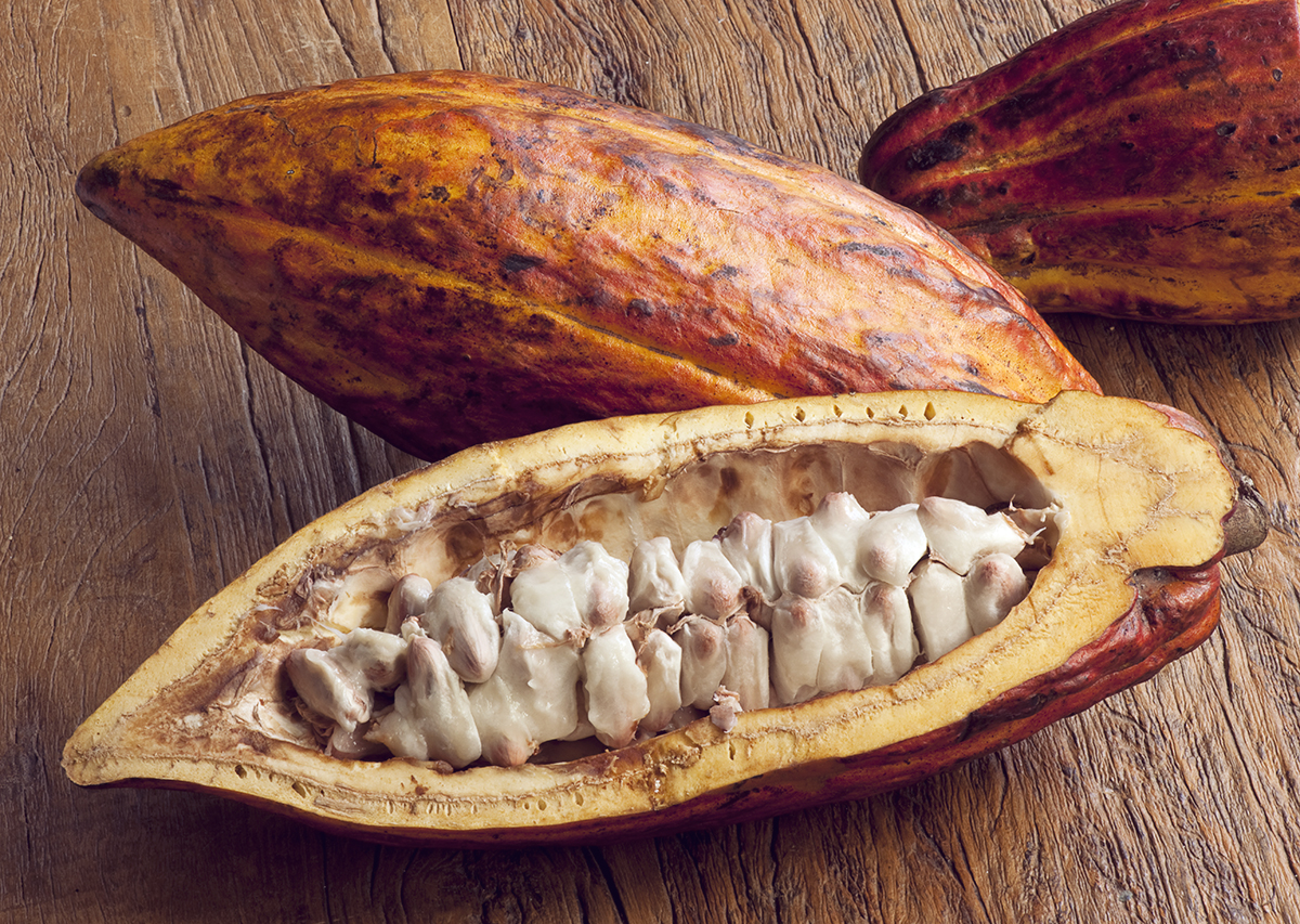 Cacao as a Superfood