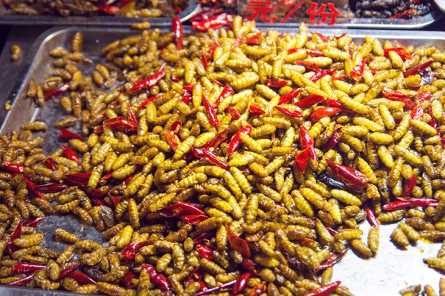 Gusanos (Maguey Worms)